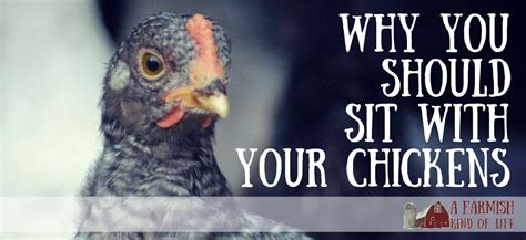 Why Should We Admit You Into Our Mba Program Answers by Why You Should Sit With Your Chickens A Farmish Of