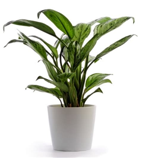 Houseplants by Houseplants That Clean The Air