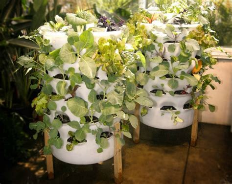 indoor vertical vegetable garden glancewheels