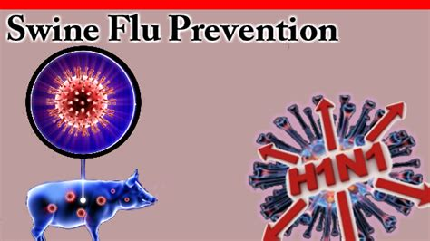h protein flu swine flu understand the foods you need to eat and avoid