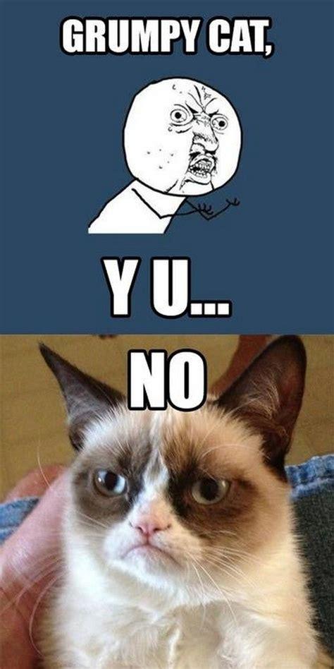 Grumpy Cat No Meme - 16 best images about grumpy cat on pinterest cats
