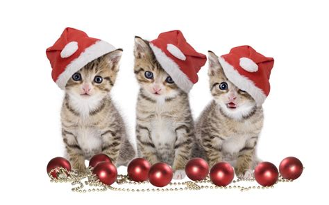 christmas animals animated animated gifs wallpapers for collection