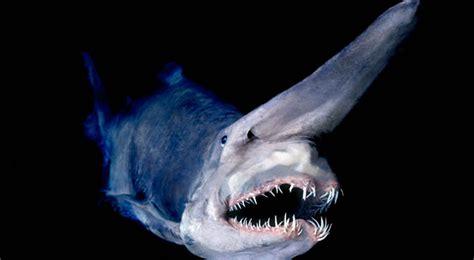 creatures of the deep top 10 deep sea creatures that will haunt your nightmares