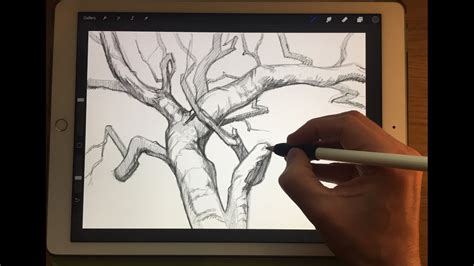 tutorial sketchbook ipad apple pencil drawing how to draw branches ipad pro 12