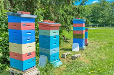 backyard bee hive 29 beautiful backyard bee hives
