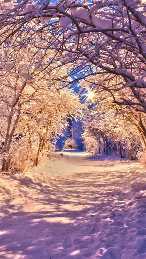 winter snow tree road iphone  wallpapers hd