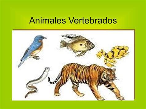 imagenes de animales vertebrados e invertebrados animales vertebrados e animales invertebrados 17 best