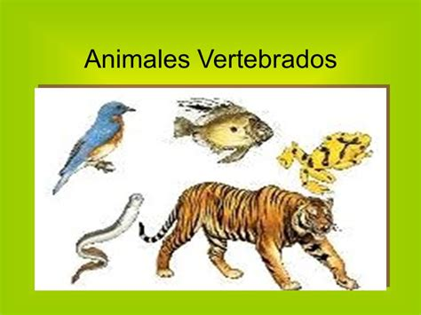 animales vertebrados ppt video online descargar animales vertebrados e invertebrados ppt video online
