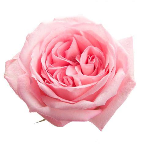 Pink O pink o hara