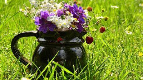 i fiori e il loro significato il significato dei fiori