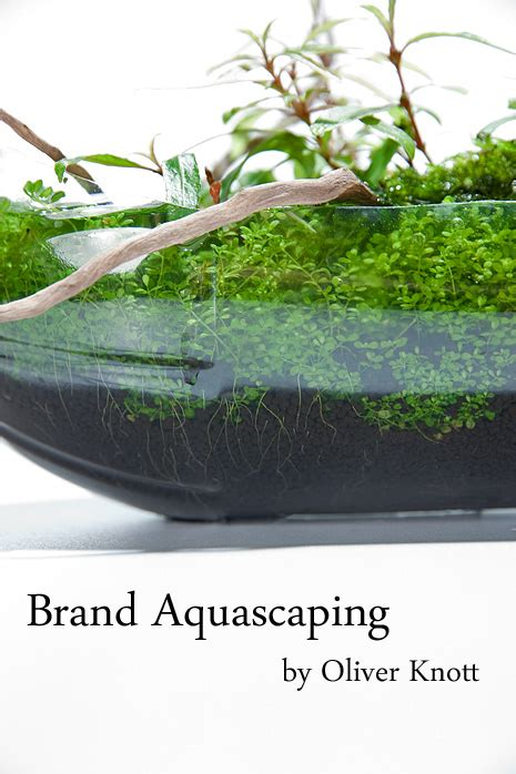 oliver knott aquascaping brand aquascaping by oliver knott photo oliver knott the