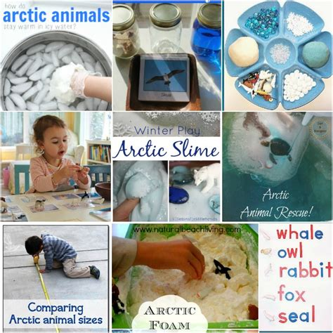solar the polar books montessori arctic activities polar regions free