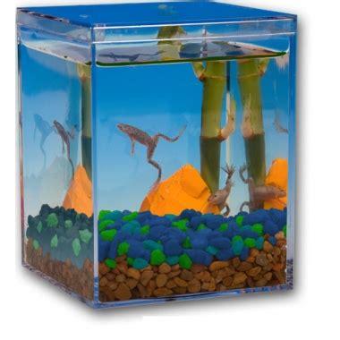 african dwarf frogs   goldfish  kids