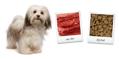 havanese food havanese foods ranked from best to worst
