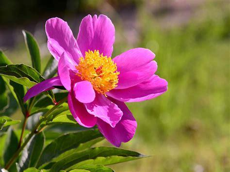 piante e fiori d italia la bellezza di piante e fiori dimensione suono due