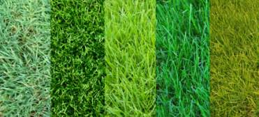 types of grass 1 855 617 1389 lawncare net