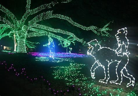 Image Gallery Houston Zoo Lights Tickets Houston Zoo Lights Ticket Prices