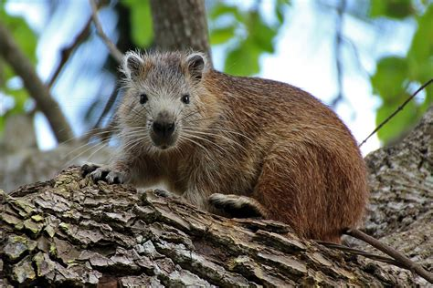 Find In Cuba 7 Endemic Animals That You Will Only Find In Cuba Lujocuba