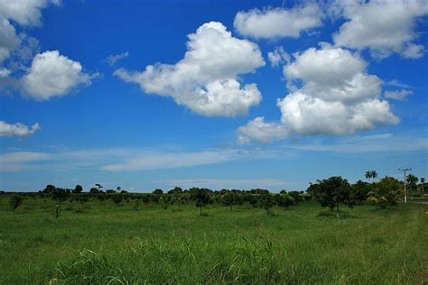 Cuban Blue Sky Landscape Cuban Landscape With Mango Blue Sky Landscape