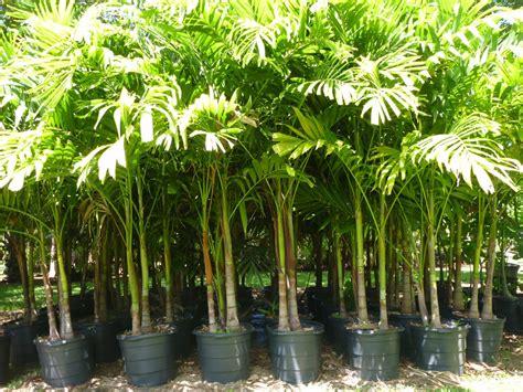 plant nursery   biggest plant nursery