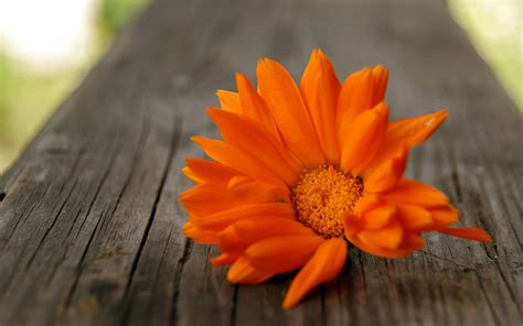 beautiful orange orange flowers wallpaper hd pictures one hd wallpaper pictures backgrounds free download