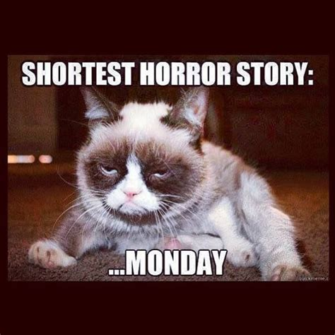 Grumpy Cat Monday Meme - monday again hairballexpress