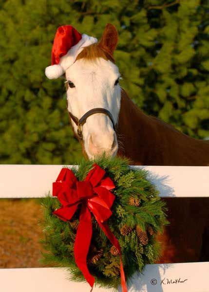 horse  year  putting    christmas card christmas horses