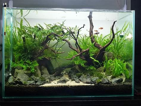 aquascaping fish aquascape fish tank stone and plant ideas betta fish