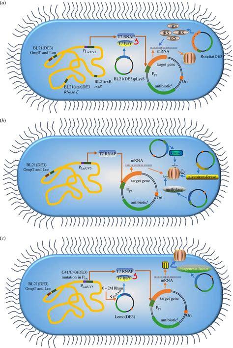 protein expression htp protein expression in e open biology