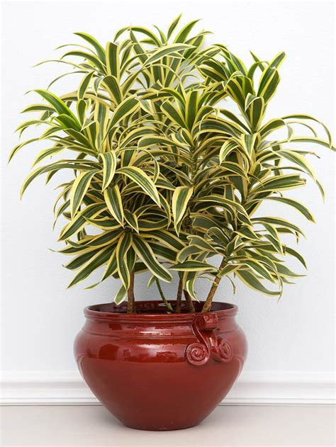 10 easy to grow indoor plants in india interior design ideas