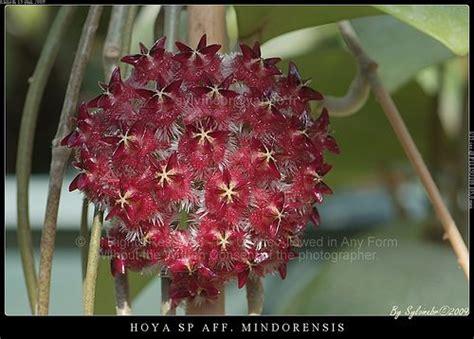 3130 best images about porcelanowy kwiat czyli moje 3131 best images about porcelanowy kwiat czyli moje hoye