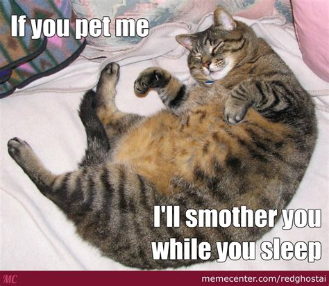 Fat Cat Meme - funny fat cat memes www imgkid com the image kid has it