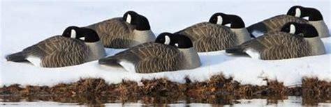 Bigfoot Sleeper Shells by Higdon Standard Canada Goose Shell Sleeper Decoys