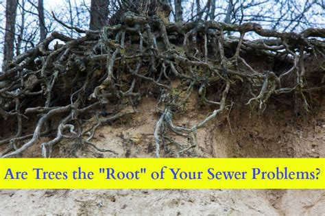 Roots Plumbing by Winter Sewer Problems Tree Roots Johns Plumbing Hvac