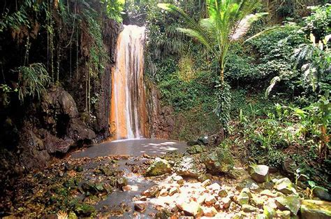 St Lucia Botanical Gardens Tourist Attractions In St Lucia Rainforest Adventures