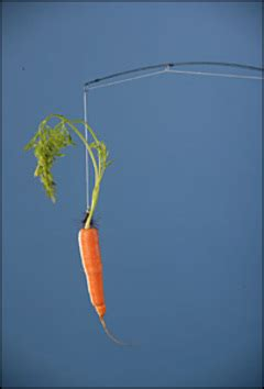 Turning A Carrot Into A Stick Fishing Stick That Is turning a carrot into a stick fishing stick that is