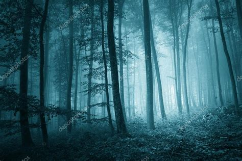 mystic blue color dreamy mystic blue color foggy forest stock photo