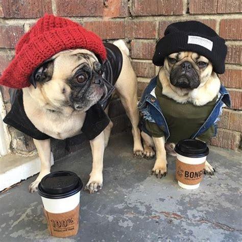 pug thug thug pug pug pug