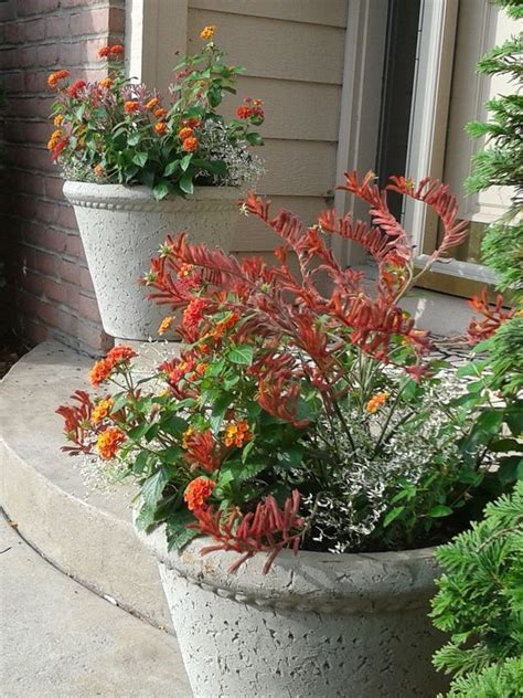 lantana container garden 105 curated container gardens ideas by stephanie2820