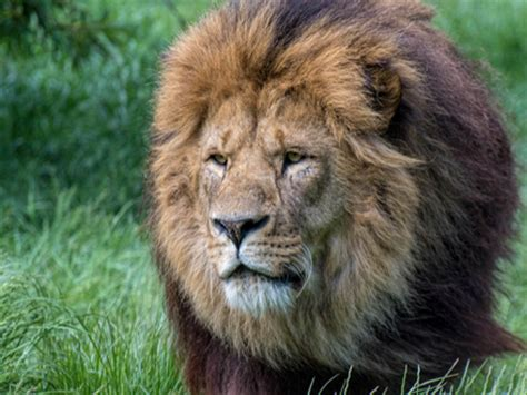 Animals | Blackpool Zoo