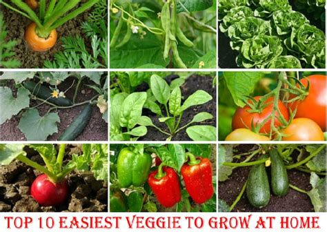 vegetable gardening how to grow vegetables the easy way books the 10 easiest vegetables to grow at home home design