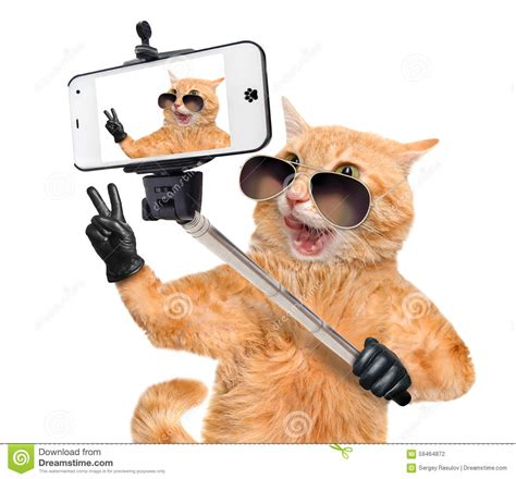 Cat Time Black Leather cat with peace fingers in black leather taking a selfie