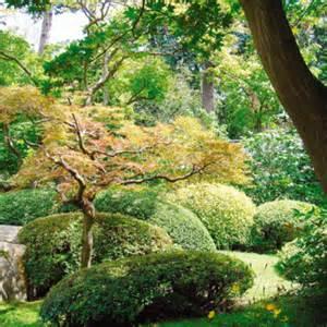 bien choisir un arbre pour jardin tendances d 233 co d 233 co