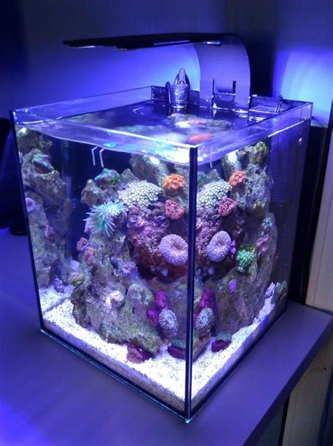 60 Best Images About Ecoxotic Ecopico Aquarium On