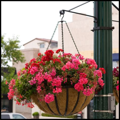 hanging basket planters large commercial quot garden quot hanging baskets