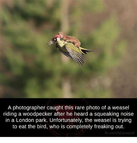 25 best memes about weasels weasels memes