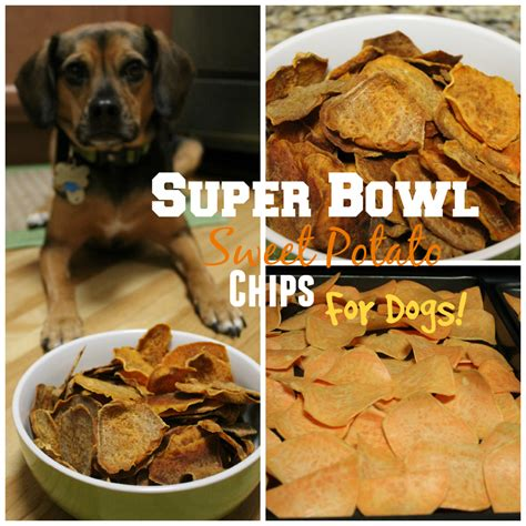can dogs eat potato chips healthy bowl snacks sweet potato chips for dogs