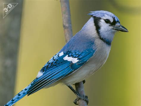 blue jay 3d 174 pet products3d 174 pet products
