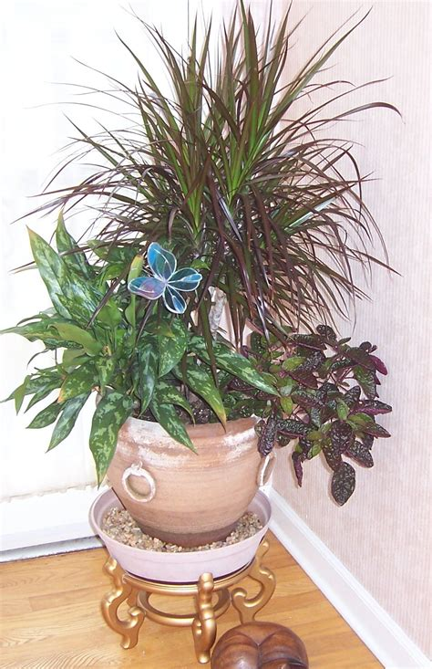 indoor plan indoor plant www imgkid com the image kid has it