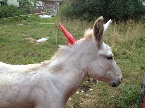 real live check out how to make a real live unicorn it s so easy to